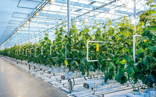 Calderas de biomasa </br>para la industria